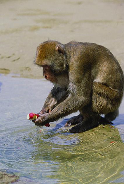 Yüzüncü Maymun Deneyi The Hundredth Monkey Hüseyin Sayın